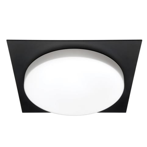 Domino Black Oyster Light